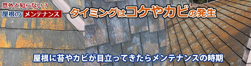 屋根に苔やカビが目立ってきたらメンテナンスの時期